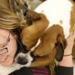 Sophomore Angie Thomas receives hugs and kisses from Dexter. Thomas said the weeks the therapy pets visit the library are some of her favorite of the semester. (Meghan Vosbeek/TommieMedia)