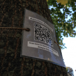 A QR code sign is attached to an American Basswood tree on the St. Thomas campus.