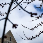 Small flowers begin to bloom. Trees around campus are budding in the warm weather. (Sunita Dharod/TommieMedia)