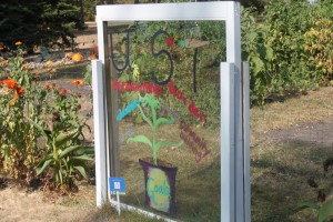 <p>The Stewardship Garden is located behind Brady Educational Center on south campus. It has donated 700 lbs of produce this year to the Neighbors Food Shelf in St. Paul. (Tarkor Zehn/TommieMedia)</p>
