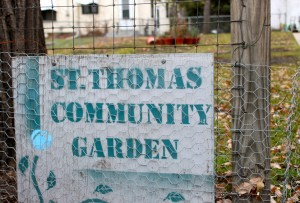 <p>The St. Thomas community garden gives students the opportunity to conduct research and grow food for low-income families. (Theresa Malloy/TommieMedia)</p>