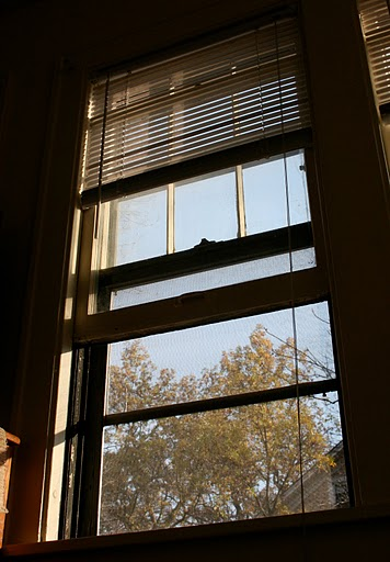 <p>Public Safety recommends that students lock windows and doors, close blinds or curtains and reinforce sliding doors or windows with wooden or metal rods placed in the sliding track in order to protect themselves. (Maggie Clemensen/TommieMedia)</p>
